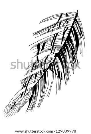 bird's feather graphic vector sketch - stock photo