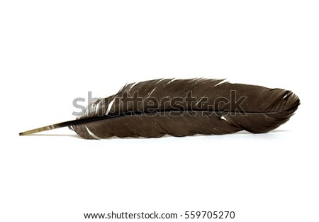 Bird's feather on a white background. A photo.