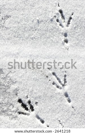 bird´s footsteps on snow