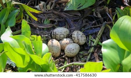 Bird's nest in natural habitat,Talay Noi Wetlands, Phatthalung, Thailand - stock photo