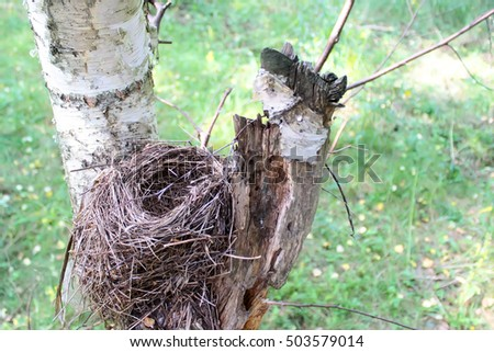 Bird's nest on a birch tree. View from above.