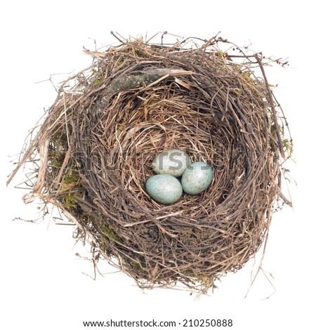 bird's nest with eggs on white background - stock photo