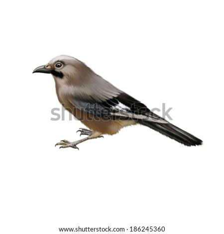 Bird side view illustration isolated on white background