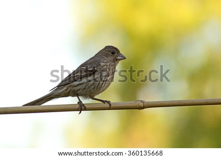 Bird sitting on a branch