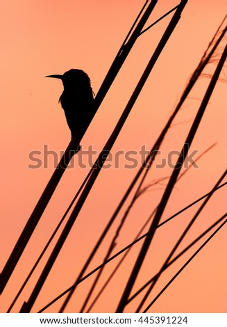 Bird sitting on a branch in silhouette - stock photo