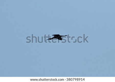 Bird snipe. A black silhouette of a bird against the sky.