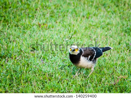 Bird standing on green grassy field with cautiousness