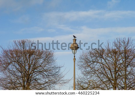 Bird standing on street lamp post with blue sky with top of branch in natural background. View of park in Europe - stock photo
