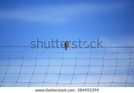 bird stands on a wire - stock photo