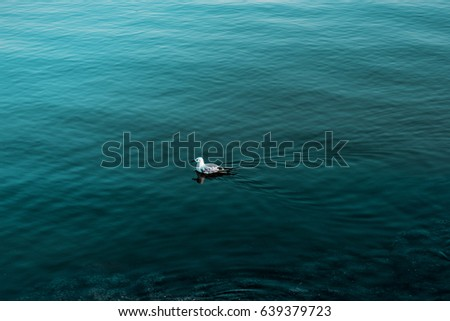 Bird swimming in blue beach during summer