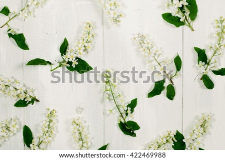 Bird-tree flowers on the white wooden background. Top view, flat lay - stock photo