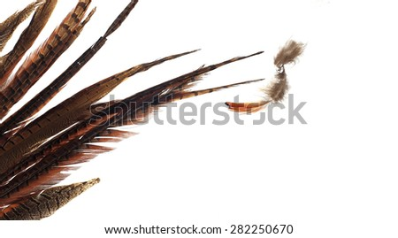 bird wing concept, feathers composition over white - stock photo