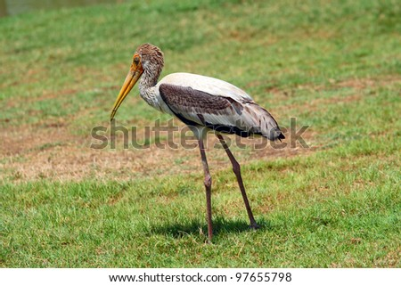 Bird with a Green Lake - stock photo