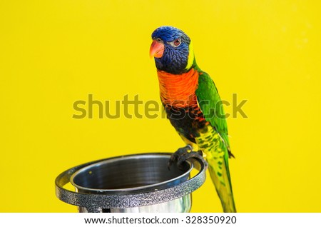 bird with food tray on yellow background, focus head bird - stock photo