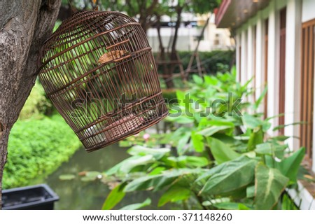 Birdcage hanging on the tree at botanic garden - stock photo