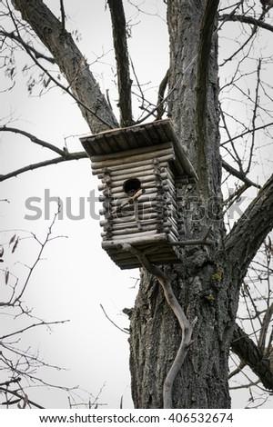 Birdhouse for birds in the park in spring - stock photo