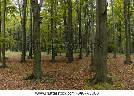 birdhouse in a beech forest