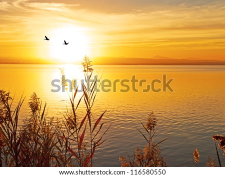 birds and the sun - stock photo