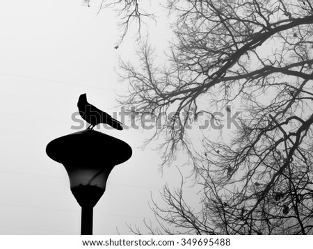Birds and trees, abstract bare trees branches canopy, street lamp - stock photo