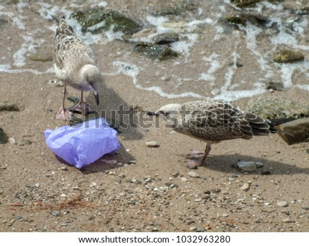 Birds eating plastic bag