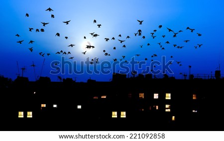 Birds flocking over city rooftops at night with a full moon