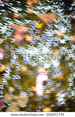 Birds fly bokeh lights at night. - stock photo