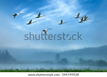 Birds flying away over blue sky background - stock photo
