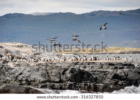 Birds flying, Beagle Channel, Ushuaia, Argentina - stock photo