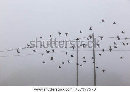 Birds flying near power lines in the fog