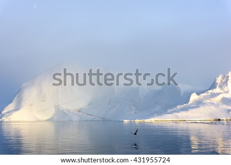 birds flying on icebergs, there is foggy weather on glaciers.