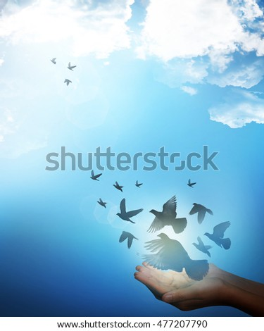 Birds flying out of two hand on blue sky background for peace concept.