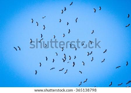 birds flying over a heavenly blue sky - stock photo