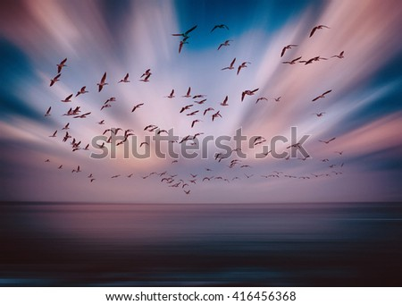 birds flying over the abstract sky