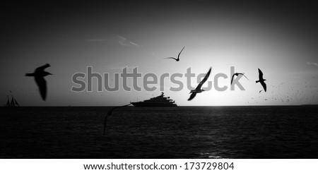 Birds flying over the Atlantic ocean, Key West, Florida, USA - stock photo