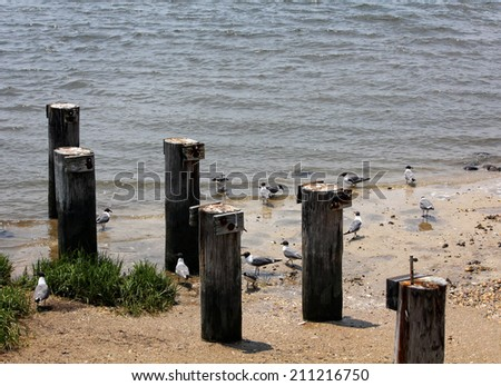 Birds frolic on the beach with wood pilings.  - stock photo