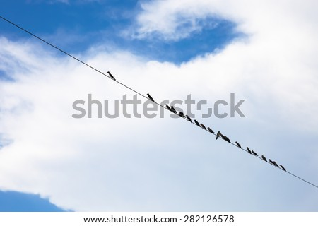 Birds hanging on a wire, Amazon, Brazil - stock photo