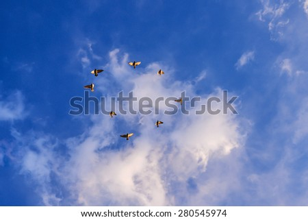 birds in a circle up to the blue sky