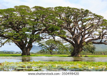 Birds in a tree in a lake in Africa - stock photo