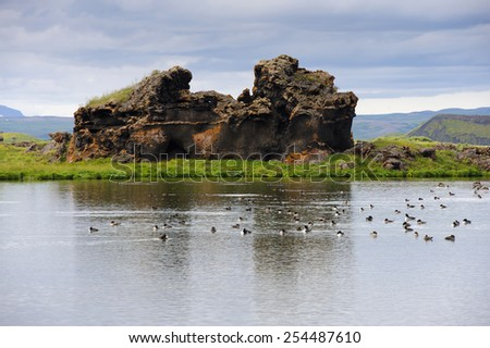 Birds in Myvatn lake among lava columns on a cloudy summer day, North Iceland