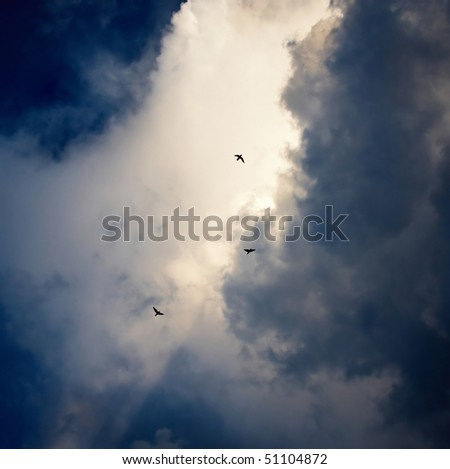 Birds in the cloudy sky - stock photo