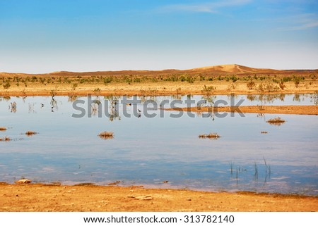 Birds in the lake of oasis in Sahara desert, Merzouga, Morocco, Africa - stock photo