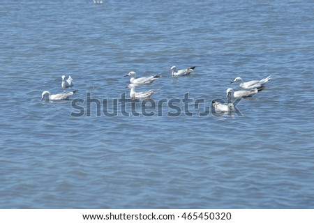 birds in the marshes and salt marshes of the Guadalquivir