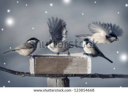 birds in winter time - stock photo