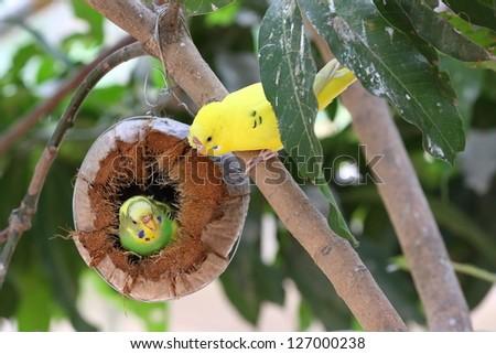 Birds make their nest - stock photo