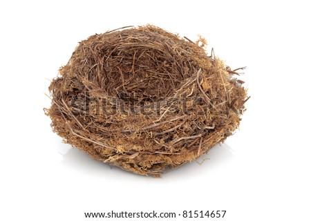 Birds nest detail isolated over white background.