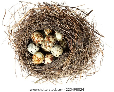 Birds nest with eggs on the white background. (isolated).