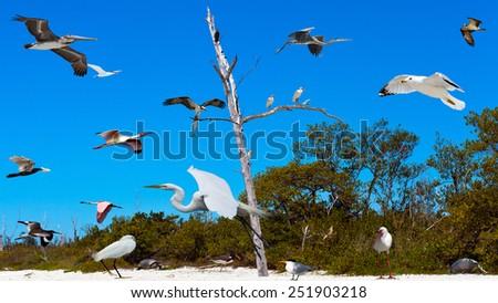 Birds of Florida, fantasy, photo-collage - stock photo