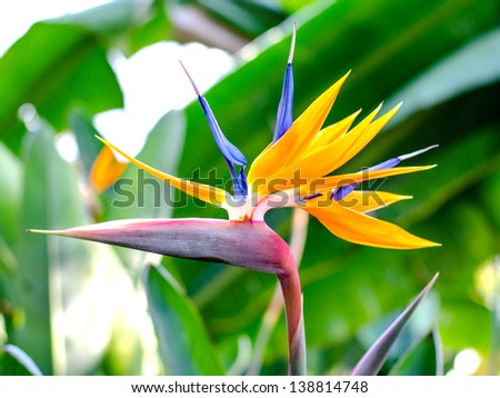 Birds of paradise - stock photo