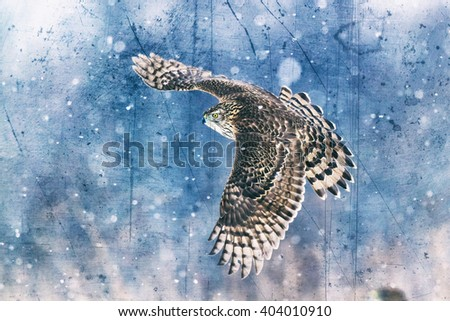 Birds of prey - Northern Goshawk (Accipiter gentilis). Old photograph stylized with scratches and dust. Old, analog photography filter. Old camera style. - stock photo
