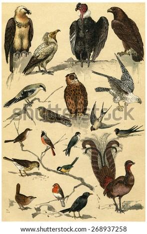 Birds of prey, vintage engraved illustration. La Vie dans la nature, 1890. - stock photo